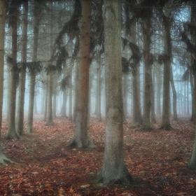 Tajemný lesík