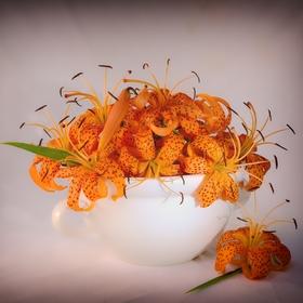 Divoké lilie