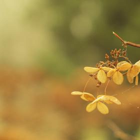 I květiny v zimě spí