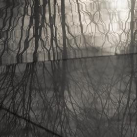 Kouzelné větvičky