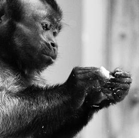 život v zoo 2