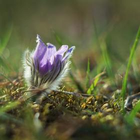 Maličký v trávě