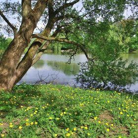 U rybníka v Trnávce