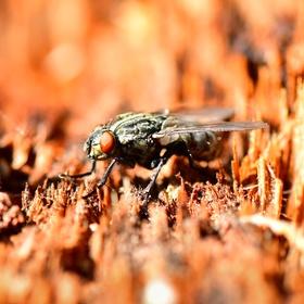 moucha na pařezu
