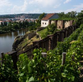 Vyšehradský vinohrad