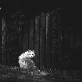 Kočičí život