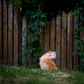 Kočičí život II