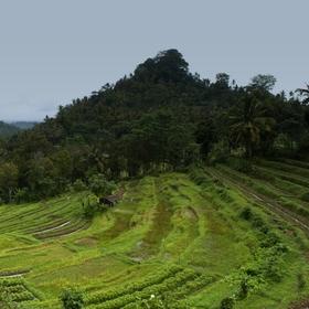 Rýžové pole na Bali