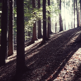 Stíny lesa