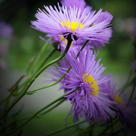 Svět křehkých květinek XI.