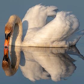 Zrcadlo, zrcadlo, řekni mi ........