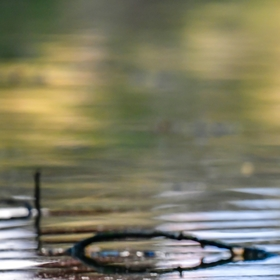 S kačkou na vodě.