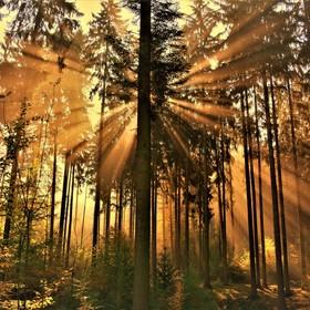 slunce v lese, slunce v duši...