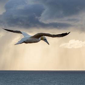 V Severním moři