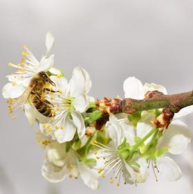 Včela...co dodat.