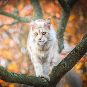 Marvin's Autumn tree