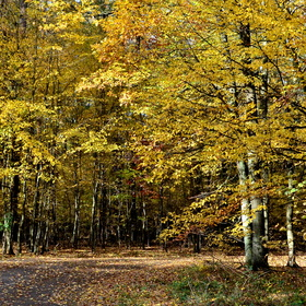 Úžasný podzim