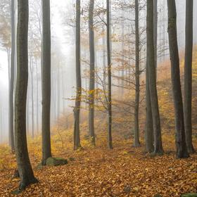 Podzimní mlha.