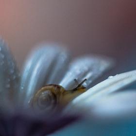 Na květině