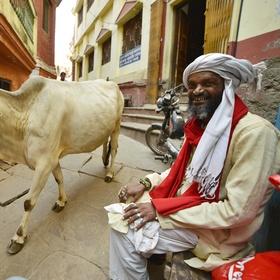Muž a kráva