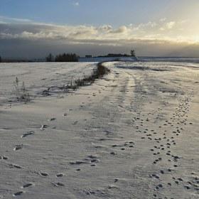 Stopy na sněhu