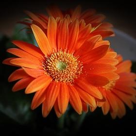 Orange...III.
