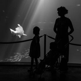 Straslundské akvárium