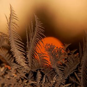 Ukrytý pomeranč