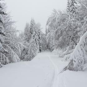 Mrazíkova cesta