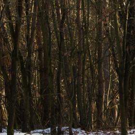 zapomenutý les