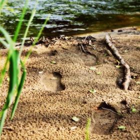 Záhadné stopy, komu tak můžou patřit :)