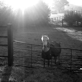Ráno v Harrogate