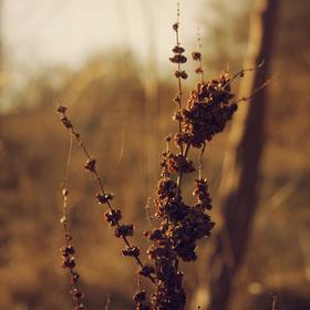 Rostlina neznámá