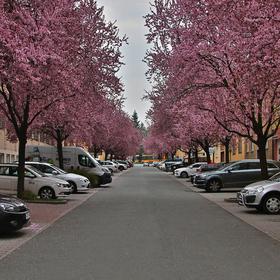 Sadová ulice, Zlín