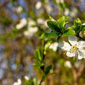 Jarní květy