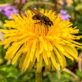 Pilná včelička