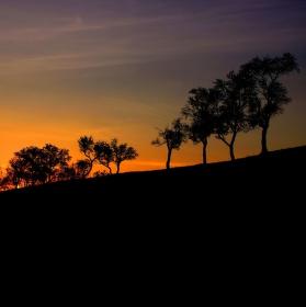 Africké stromy