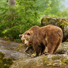 obrázky z Bavorského lesa (6)