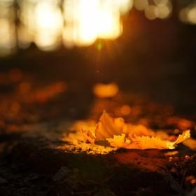 podzimová reminiscence