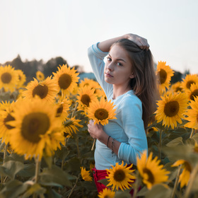 You're the sunflower...