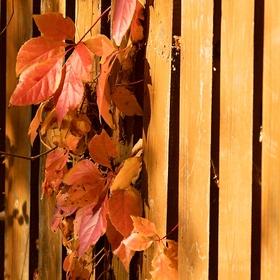 barvy podzimu ......