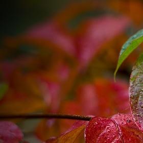 Podzim maluje....