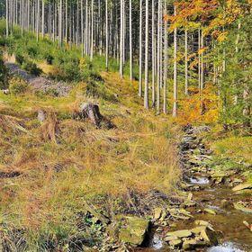 Podzim v Podolankách