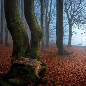Jednou v lese