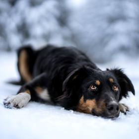 Keshka na sněhu