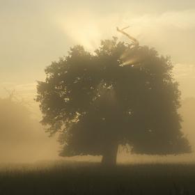 Mlhavá inverze