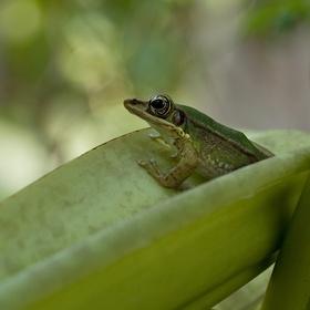 Hodinka se žabákem