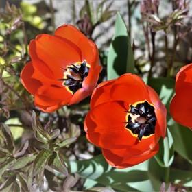 A přece kvetou ...