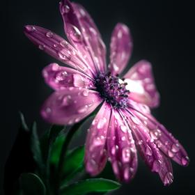 Květina jako solitér