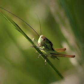 Ze života hmyzu (3)